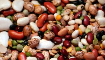 Как консервировать бобы на зиму